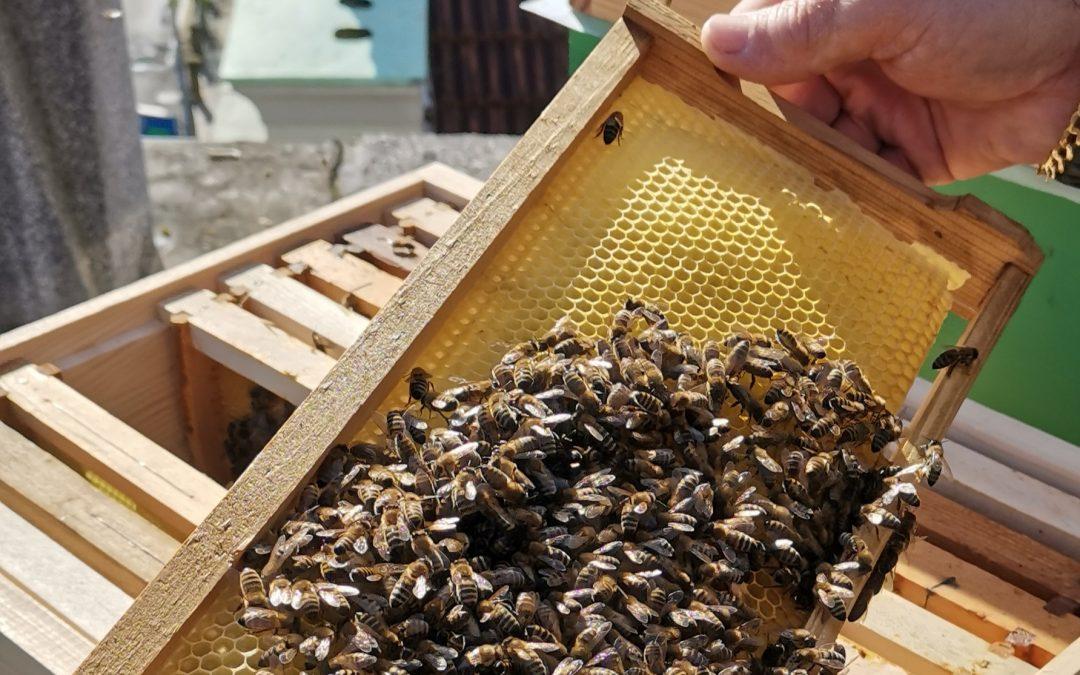 Čebelarski krožek