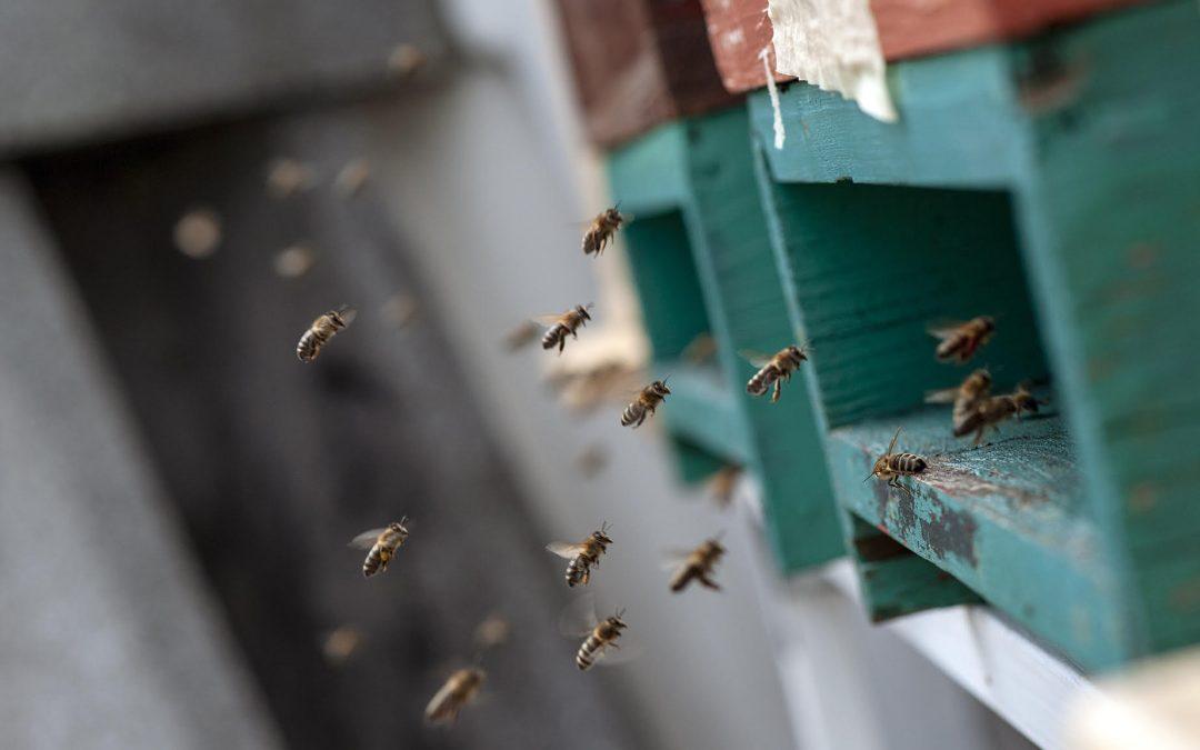 Prišle so čebele!